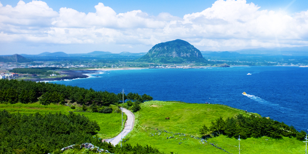 ve may bay di  jeju